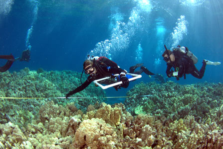 Marine science students map a coral reef