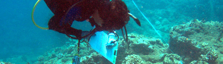 a diver conducts marine science research