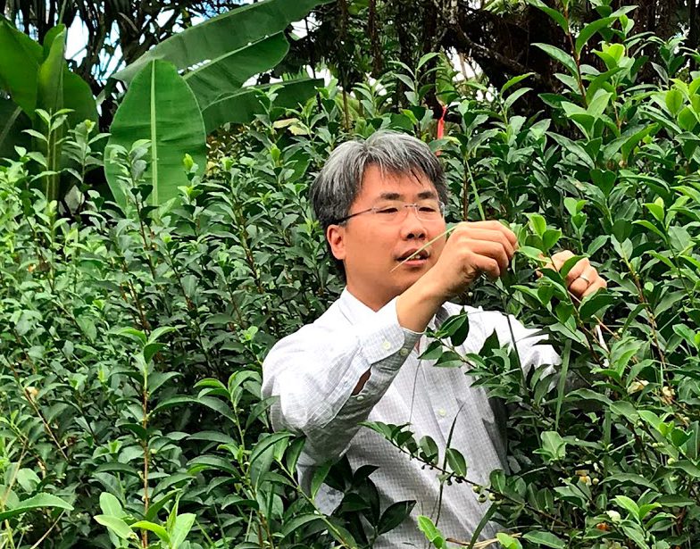 "Faculty from ""Ole Miss"" conducting research on tea plants"
