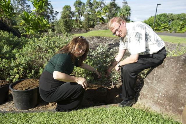 Ohia Planting (1)