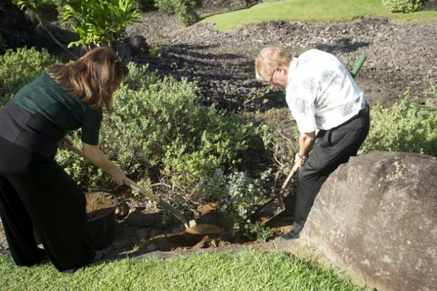 Ohia Planting (2)