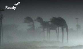 "Photo of hurricane blown palms, with the word ""Ready"" and a check mark in the left top corner"