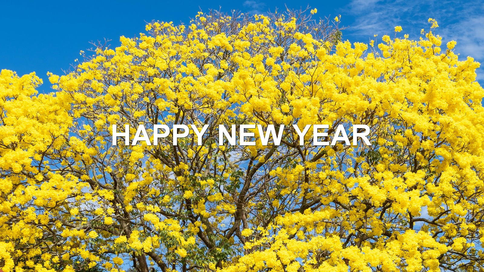 Flowering tree, yellow flowers, with words: Happy New Year.