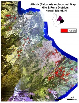 Satellite Albizia mapping done in June 2014.