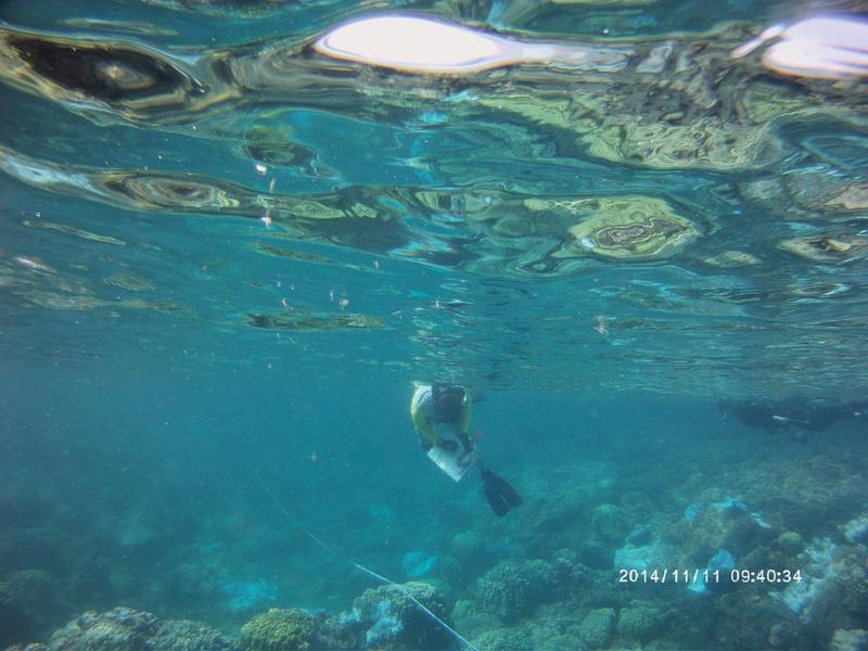 Underwater shot of Misaki Takabayashi conducting survey. Date/time on photo: 2014/11/11 09:40:34