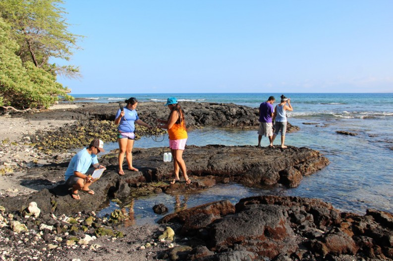 With guidance from UH Hilo TCBES graduate student, Leilani Abaya (orange shirt), UH Hilo PIPES summer 2015 interns collect seaweed and water samples along the Puakō coastline for detection of sewage pollution (l-r) Devon Aguiar, Jazmine Panelo, and Byran Tonga are UH Hilo marine science undergranduates, and Belytza Velez is from the University of Puerto Rico.