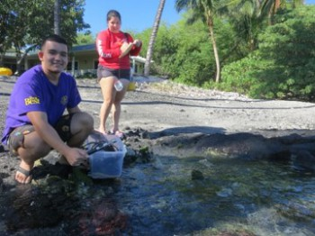 Collecting water samples along the Puakō shoreline for fecal indicator bacteria analysis are (l-r) Devon Aguiar, UH Hilo marine science undergraduate and UH Mānoa C-MORE trainee, and Serina Kiili, UH Hilo marine science undergraduate and EPA fellow.