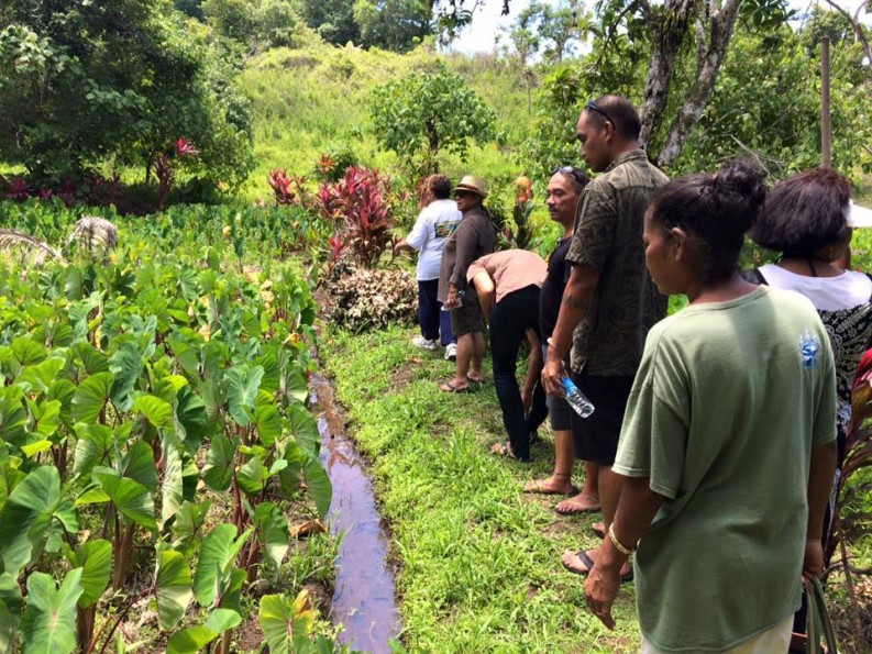 Visiting the Ngarchelong Mesei Project, an initiative to restore, develop and manage taro fields in Ngarchelong State, Palau.
