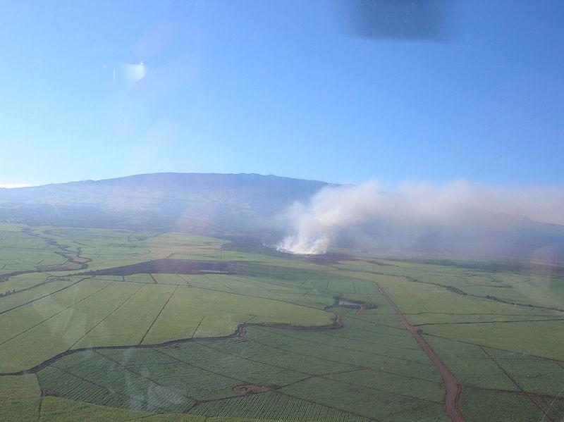Study: Large cane burns on Maui linked to respiratory distress