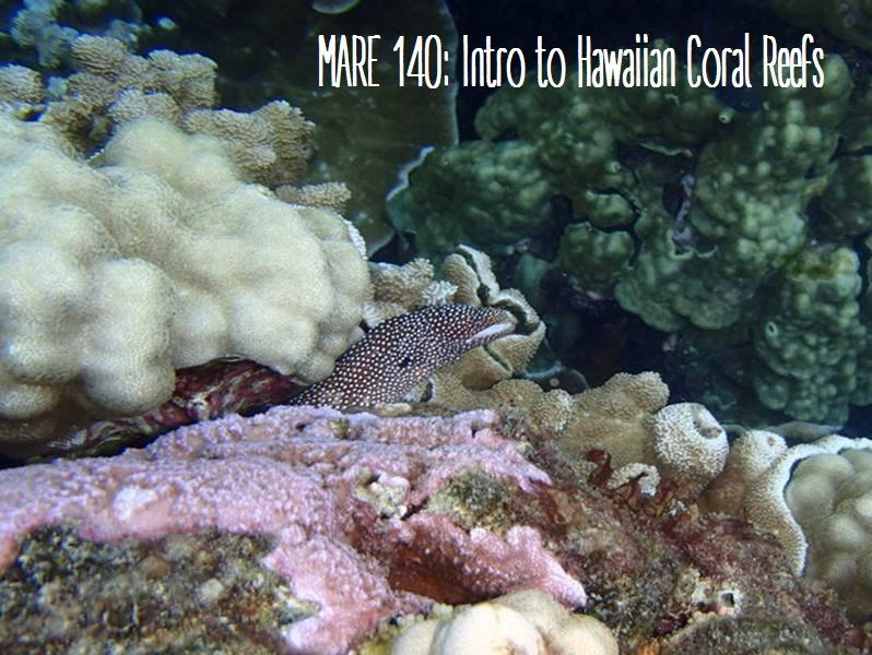 Underwater photo of eel hiding in colorful coral (greens, white, pinks), with the words MARE 140: Intro to Hawaiian Coral Reefs