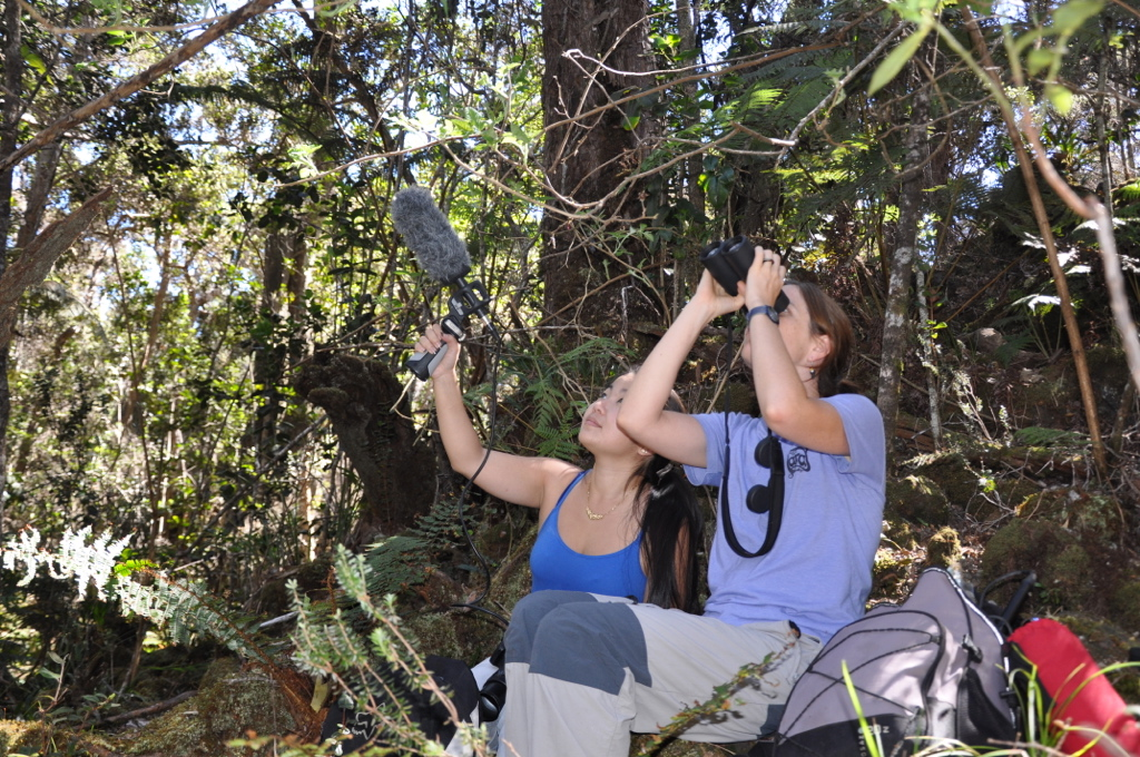 Two researchers recording birds in the forest above Hilo.