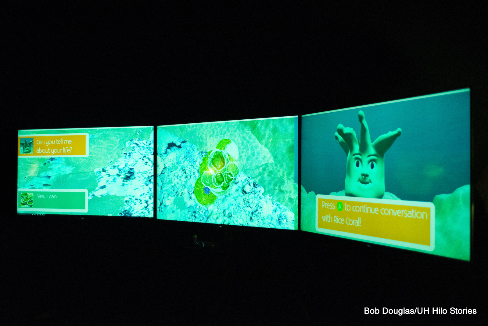 Three-screen view of project concerning corals.