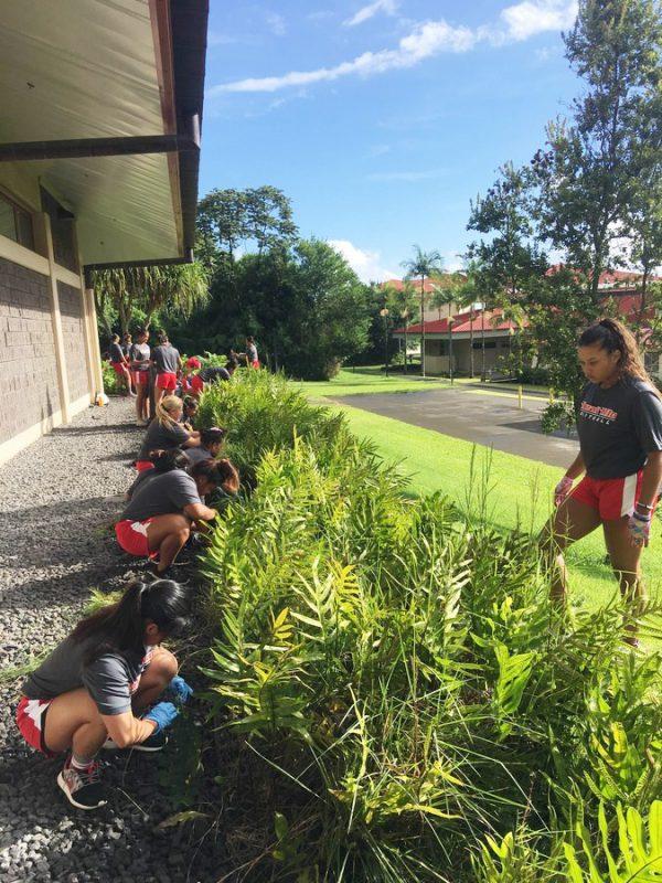 Students working in fern garden