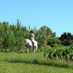 Man riding horse in field.