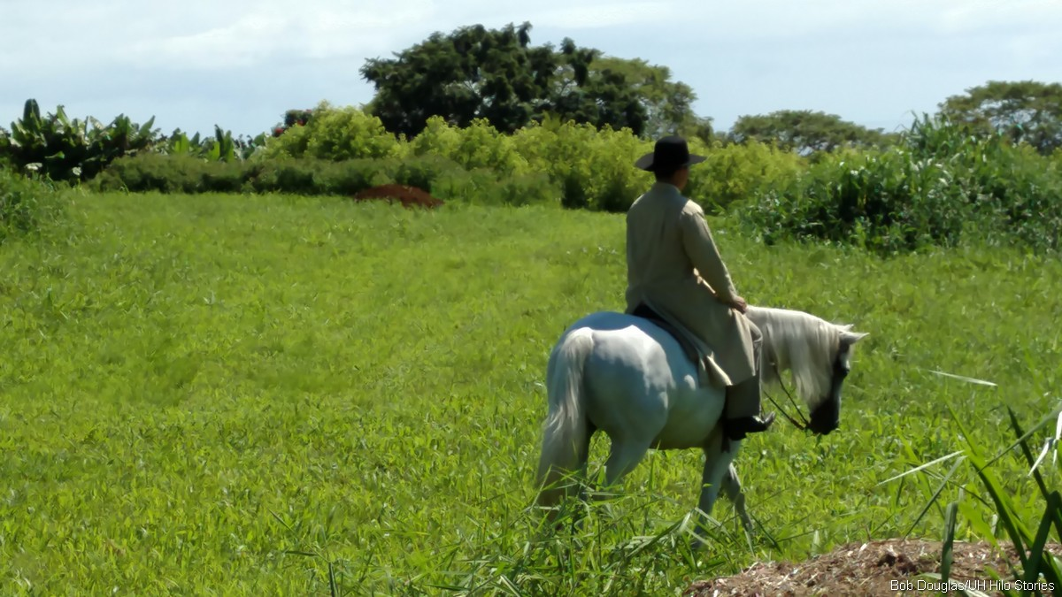 Man riding horse in pasture.