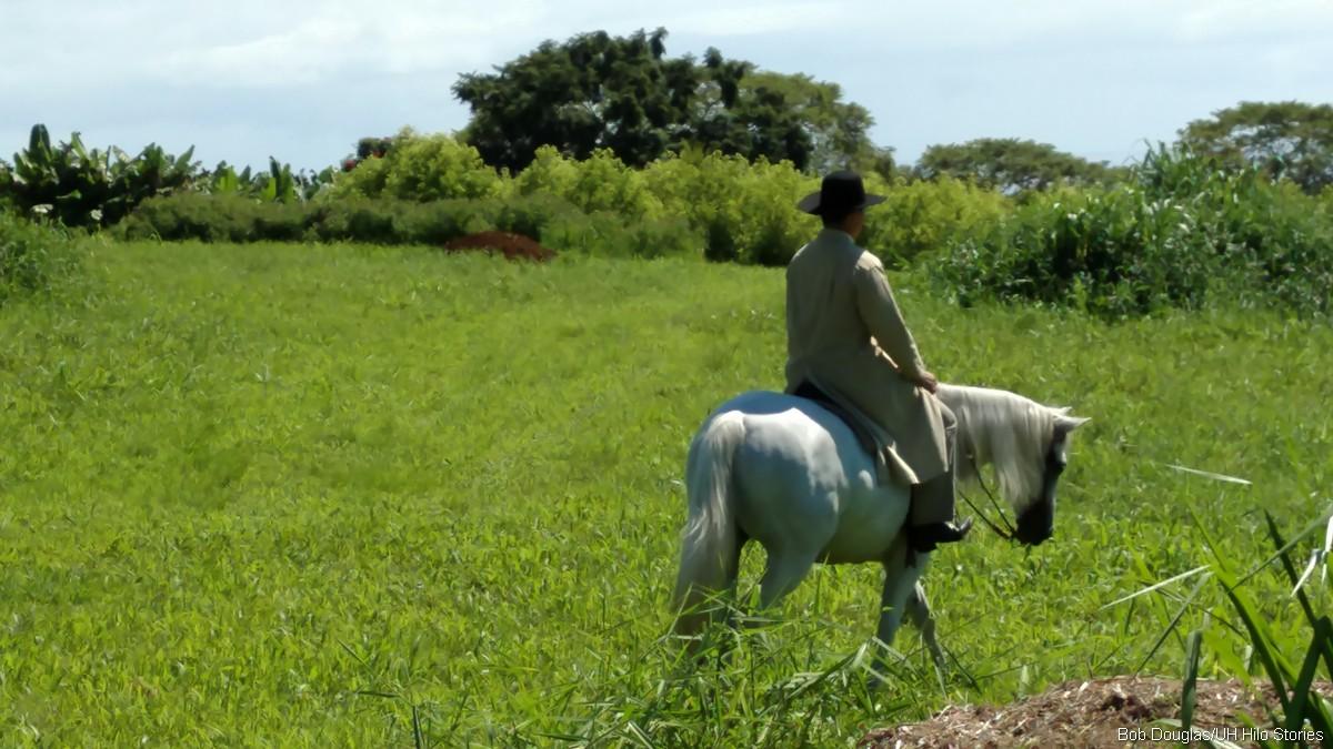 Man riding horse in pasture.