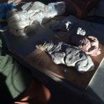 Clay models.