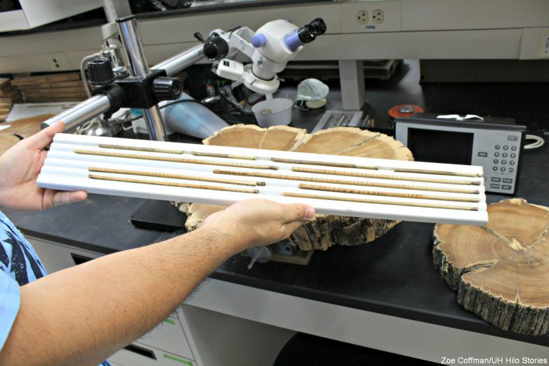 Measuring slice of wood.