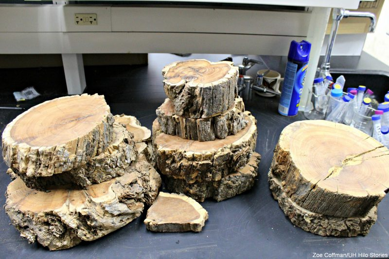 Stacks of slices of wood.