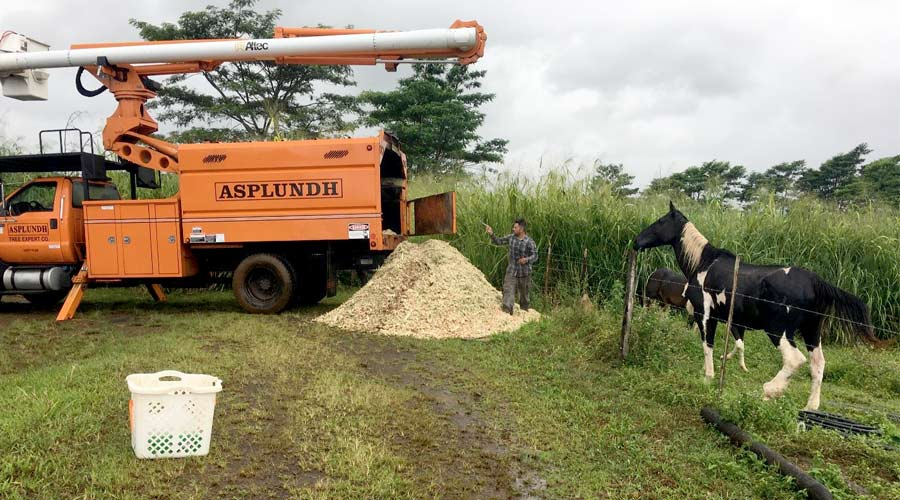 A large pile of wood chips and an orange tree trimming truck in a horse pasture, a black and white horse looks on.