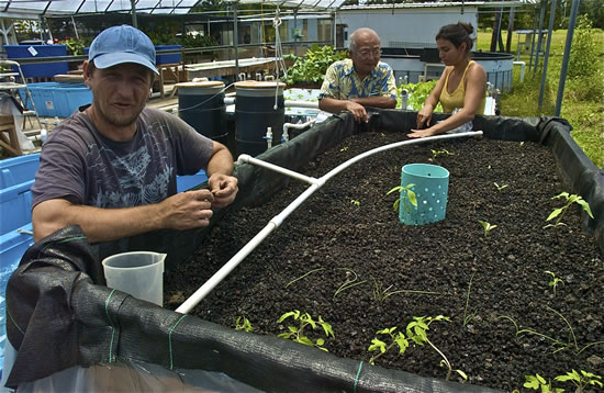 Students working on aquaponics project. Prof Bill Sakai in background talking to student.