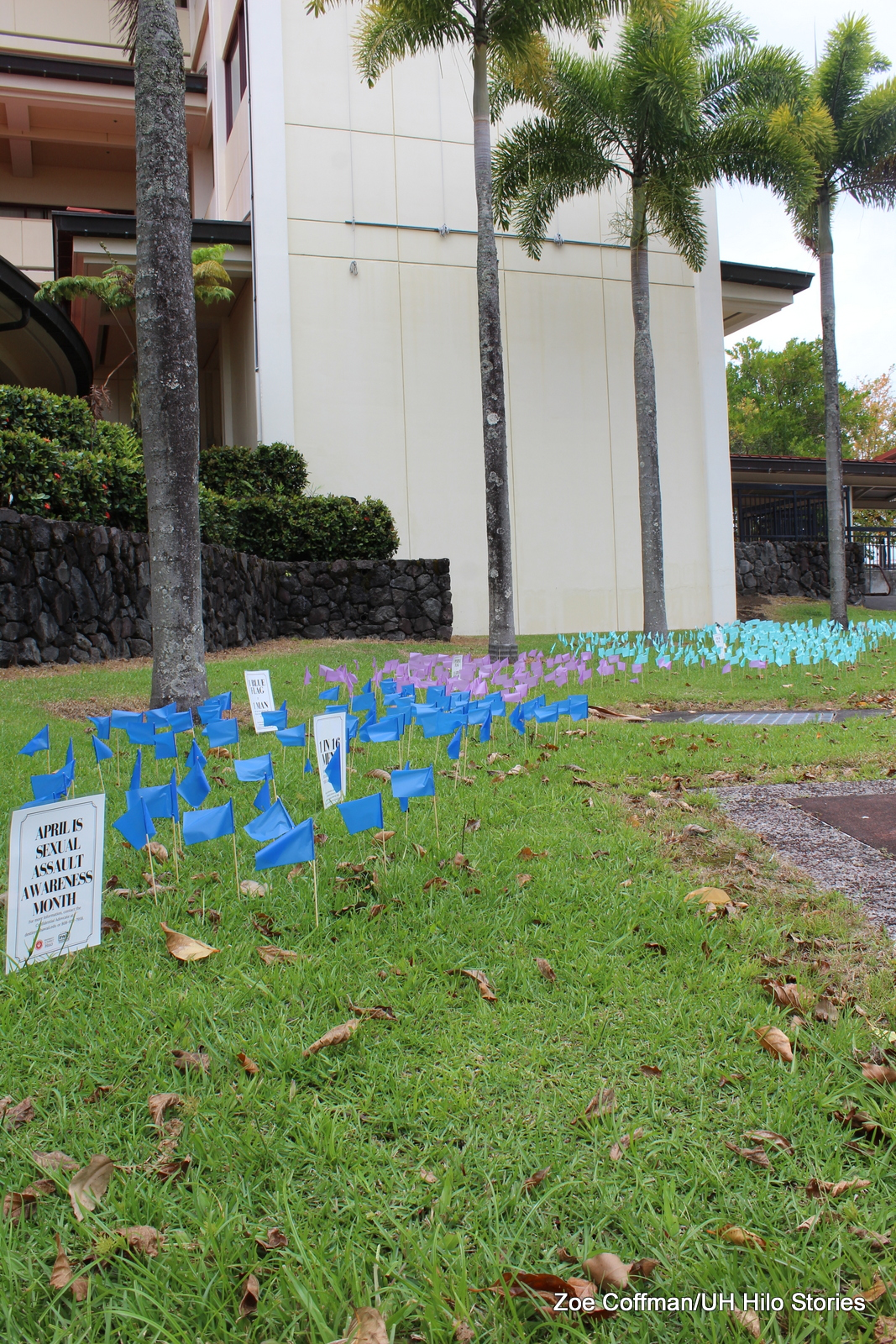Flag display on lawn. Flags are pinned into the lawn with signs showing statistics. Palms in background. Front sign: APRIL IS SEXUAL ASSAULT AWARENESS MONTH.