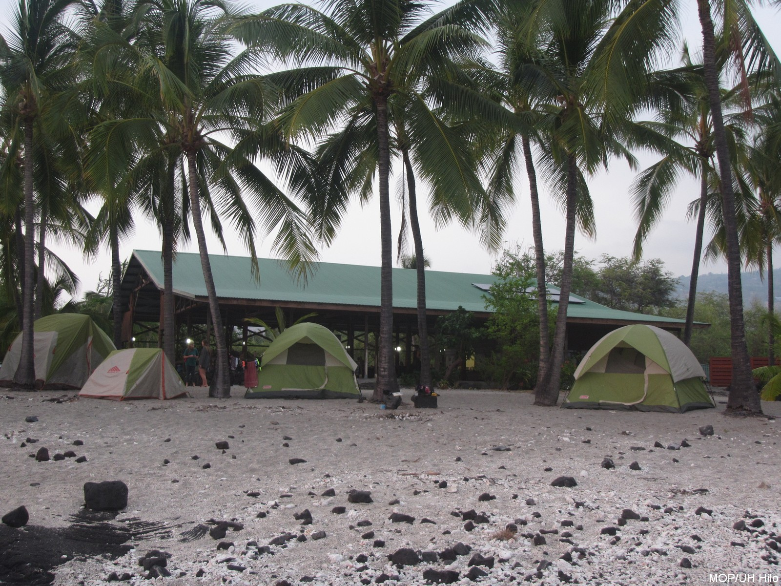 Tents set up on the beach.