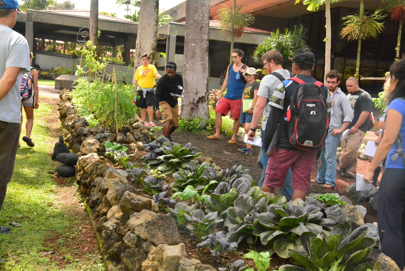 Students Gather Around Garden Filled With Leafy Greens.