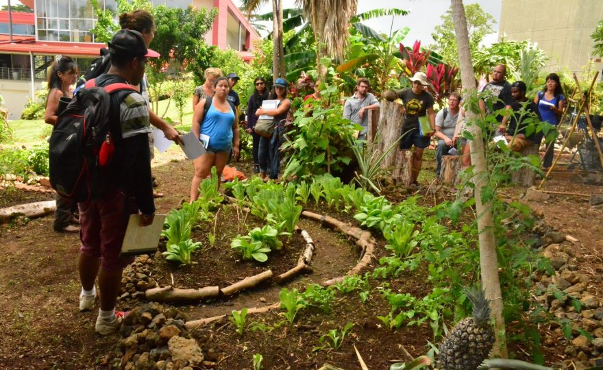 UH Hilo students practice sustainable agriculture in gardens around campus
