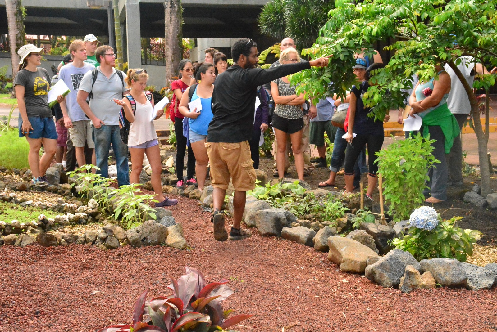 UH Hilo students practice sustainable agriculture in gardens around ...