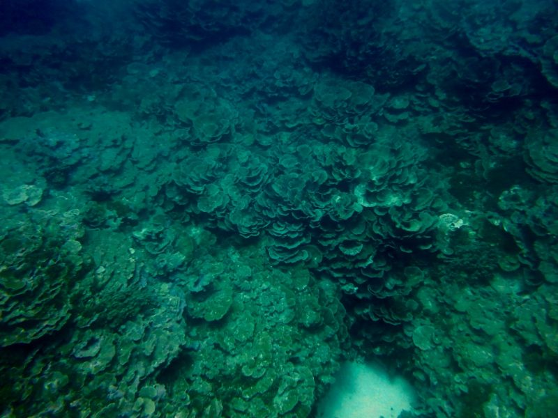 Dark green reef.