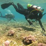 Interns do coral and fish research in Northwestern Hawaiian Islands