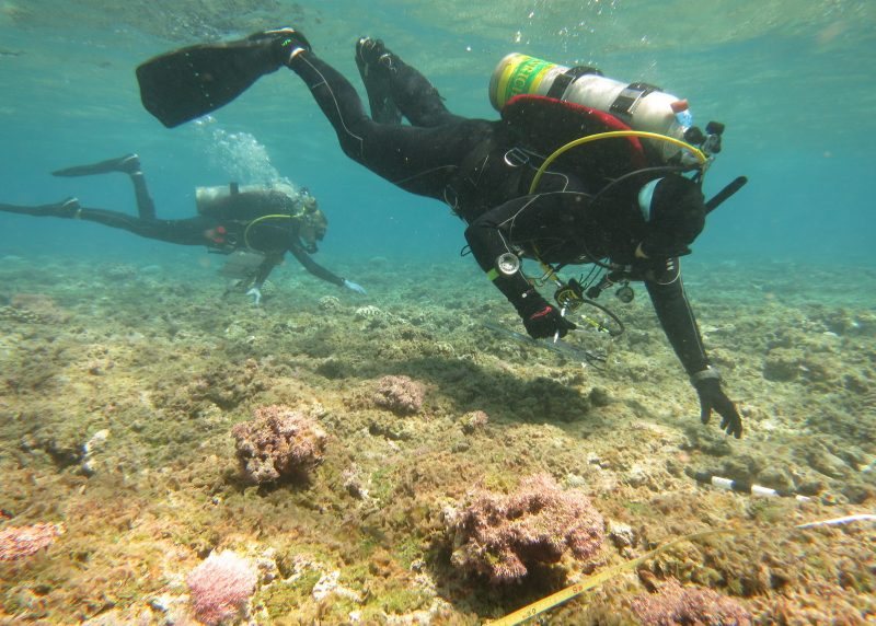 Two divers under water over reef.