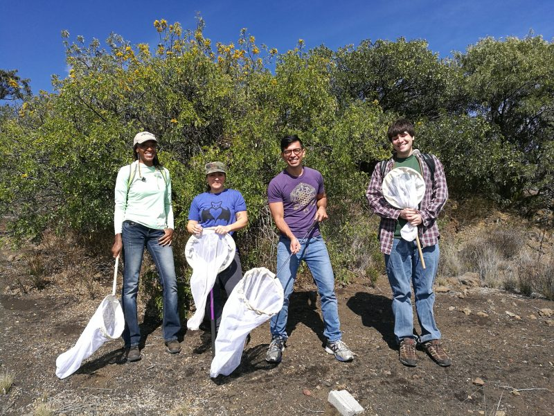Jonathan Koch and three others stand in field holding nets to catch insects.