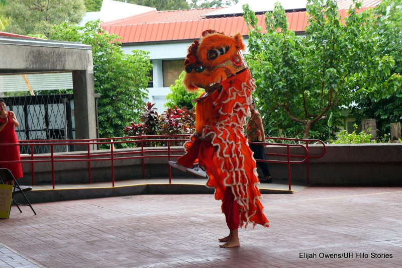 Lion dances, standing up tall.