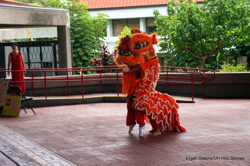 Lion dances, raising the head.