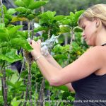 UH Hilo sustainable agriculture program ranks among top five in the country for affordability