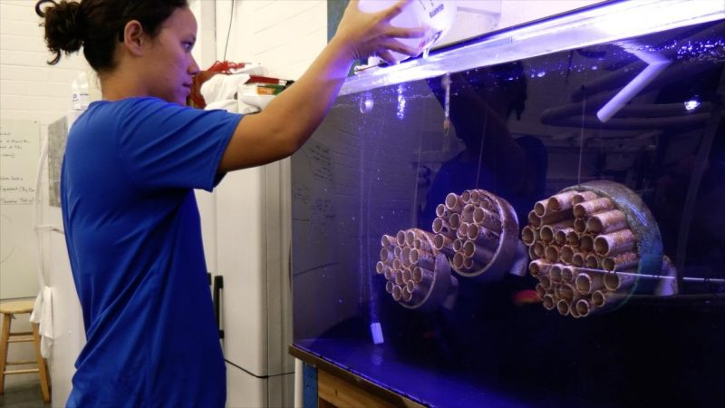 Student pours water into tank.