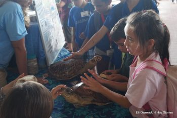 Schoolchildren looking at a turtle display with life size models of turtles.