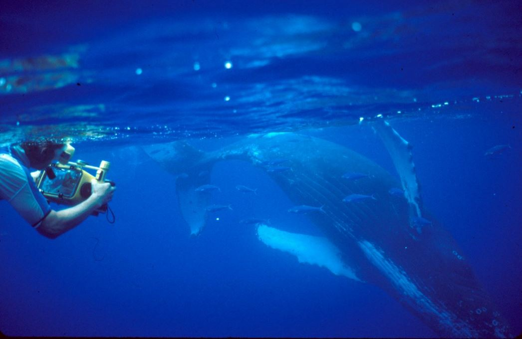 The work of UH Hilo whale researcher Adam Pack featured on PBS series, Changing Seas