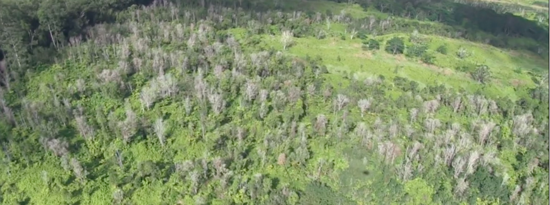 UH Hilo conservation biologists are using high-tech acoustics to study Rapid ʻŌhiʻa Death impact on forest animals