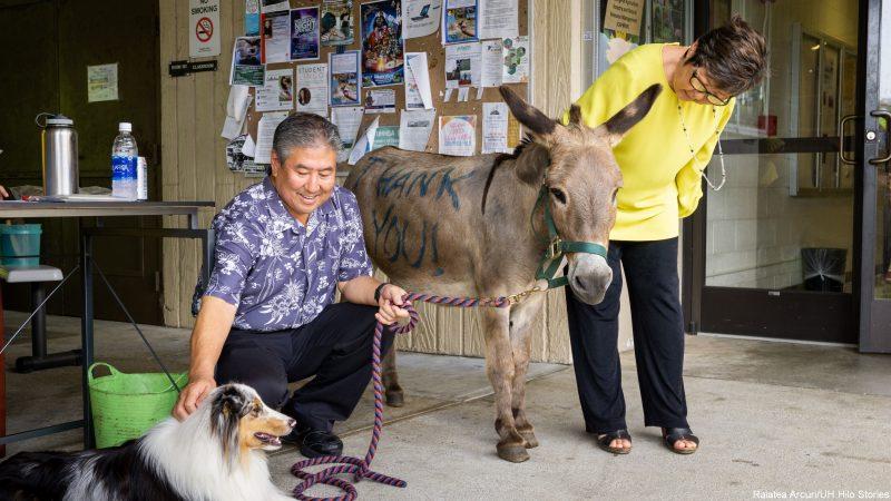 Alan Wong and Marcia Sakai with donkey and dog.