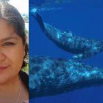 Two images, one of Sabena and one of humpback whale mother and calf.