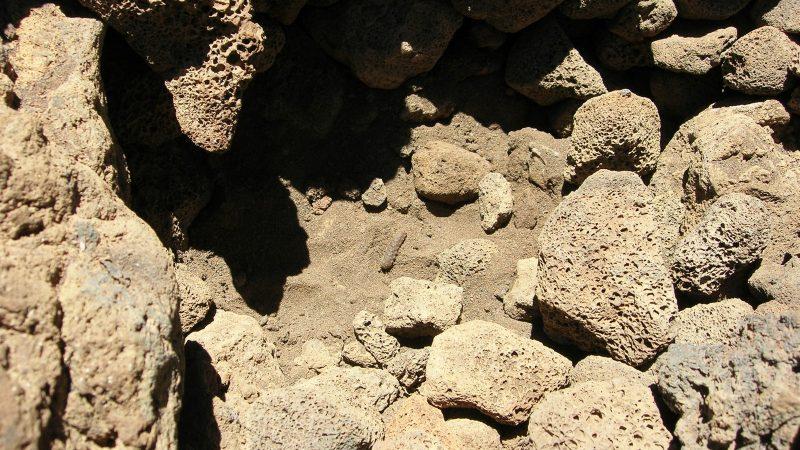 Larva in soil.