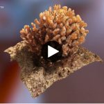 3D image of coral.