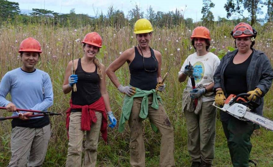 UH Hilo ecologists win medal for provocative native forest restoration research