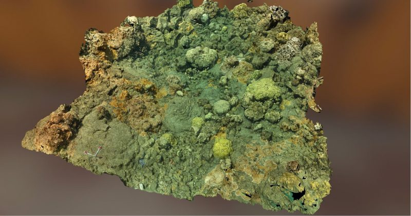 Coral reef plot.