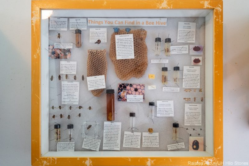 "Glass display of ""things you can find in a beehive."" Honeycomb, bees, wax, etc. The labels are not clear in the photo."