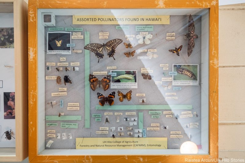 Insect display uner glass.