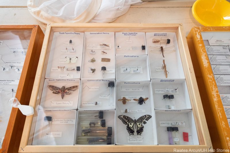 Butterfly display in a case under glass..